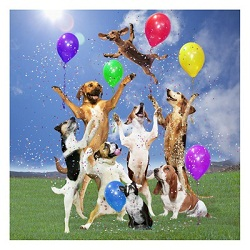 dog-party